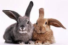 Идея бизнеса на разведение и продаже кроликов